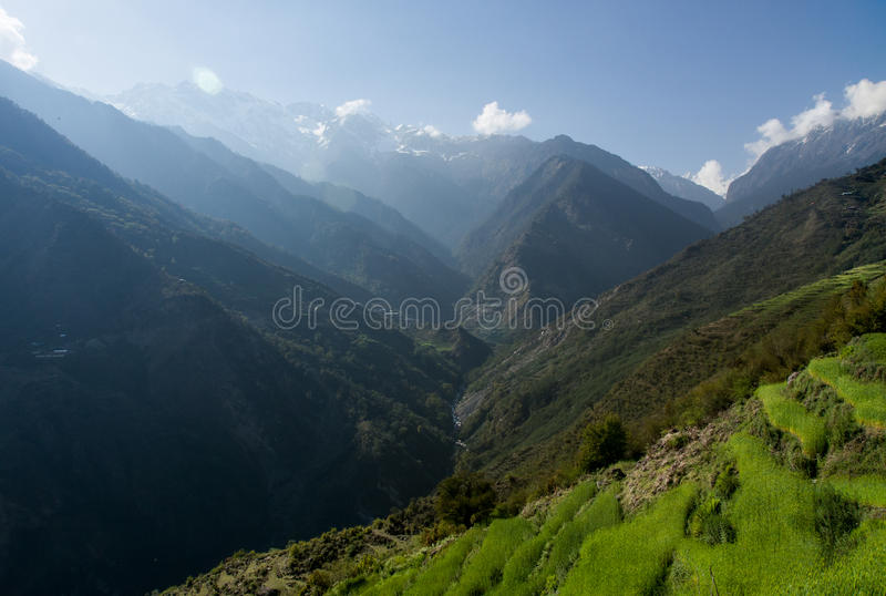 Risfält i Nepal arkivbilder