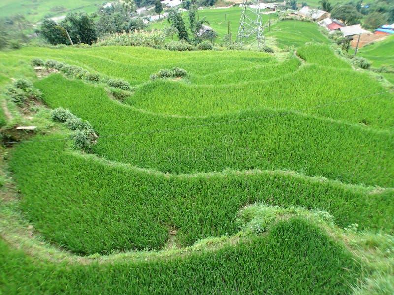 Risfält i Sapa, Vietnam arkivfoton