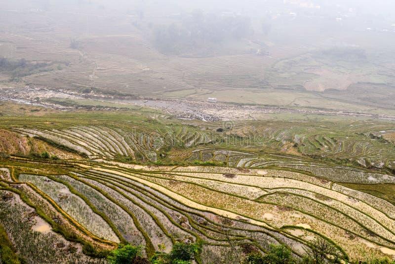 Risfält i Sapa, Vietnam fotografering för bildbyråer