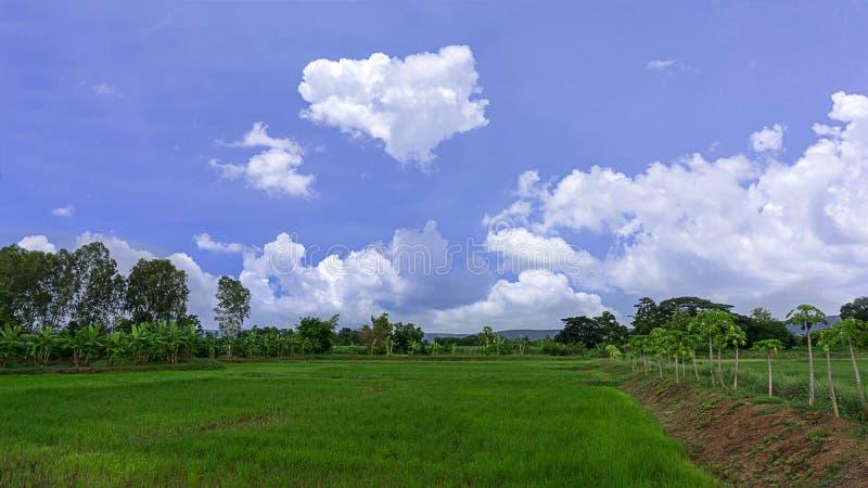 Risfält landskap härligt med bakgrund för blå himmel och moln royaltyfria foton