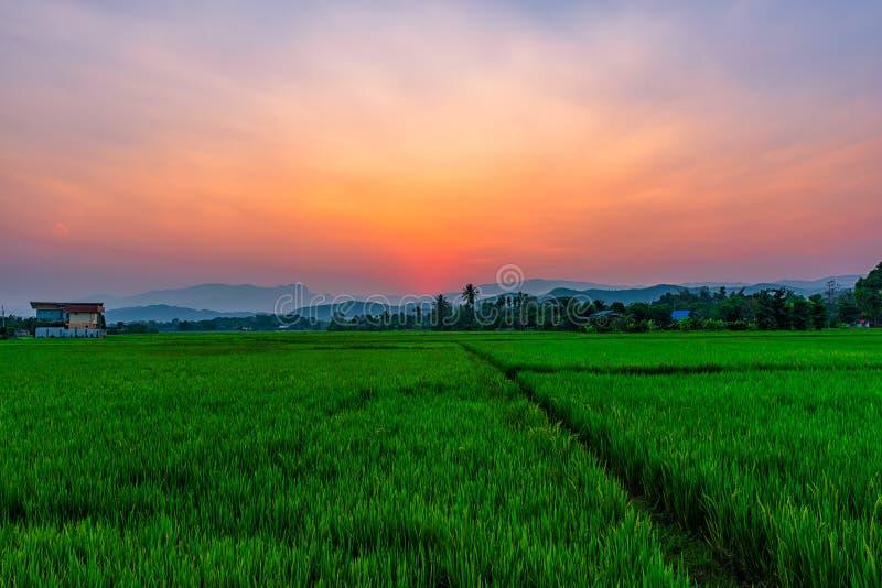 Risfält Mae Kon på solnedgången i Chiang Rai, Thailand arkivbild