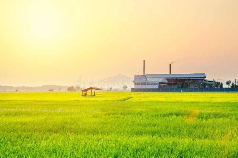 Risfält med branschfabriken royaltyfria bilder