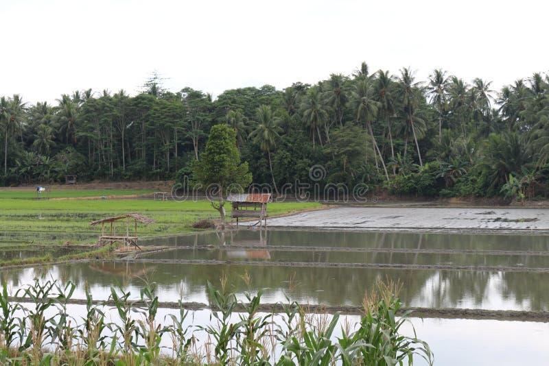 Risfält- och fisklantgård arkivfoton