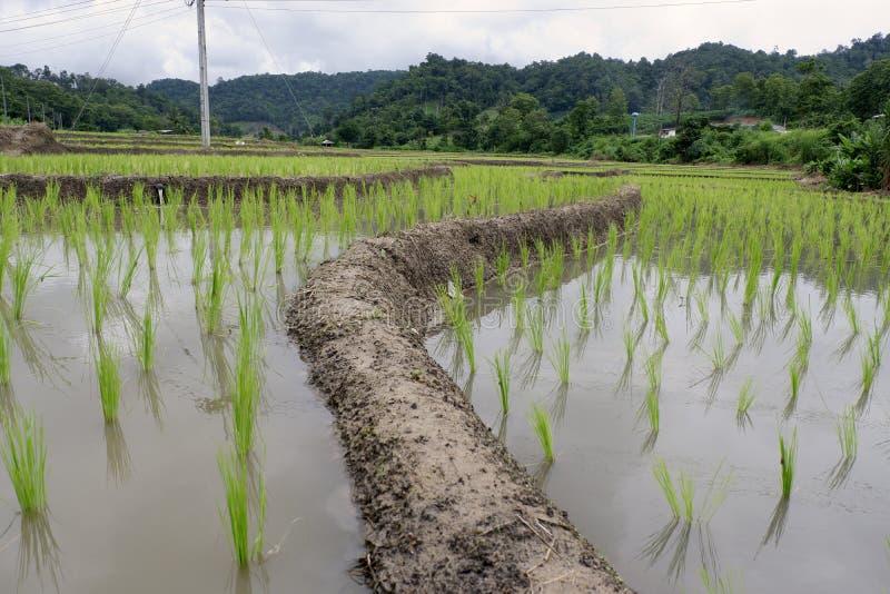 Risfält och gräsplanberg arkivfoto