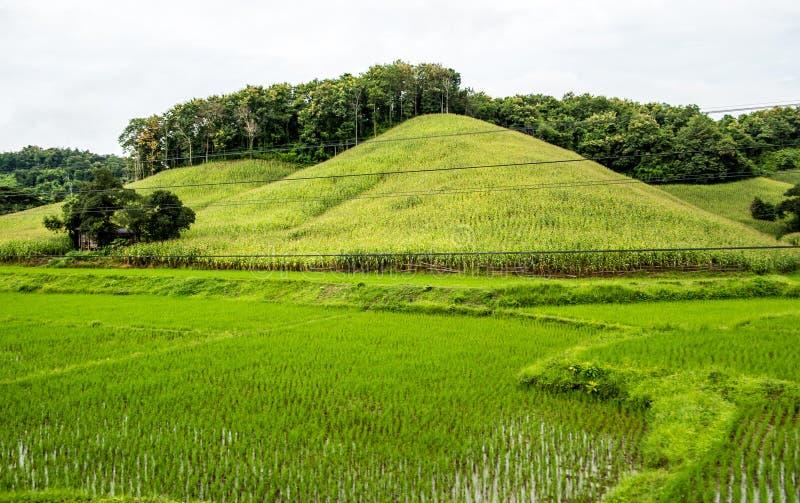 Risfält- och havrekullekoloni, Chiang Mai royaltyfri fotografi