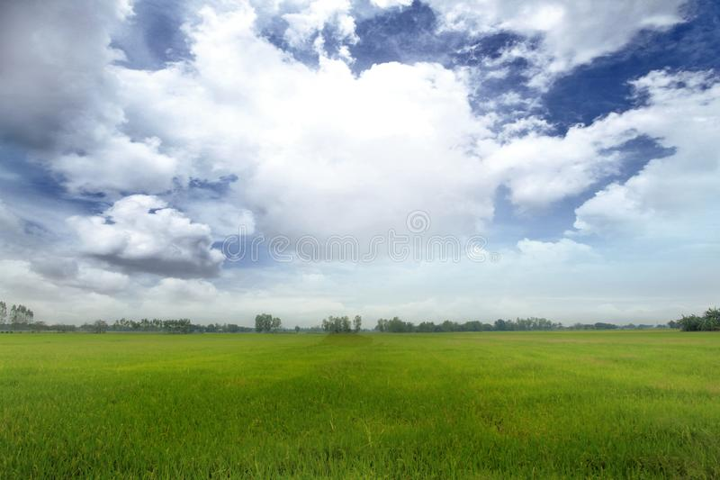 Risfält och himlen med många moln i den varma middagsolen royaltyfri bild