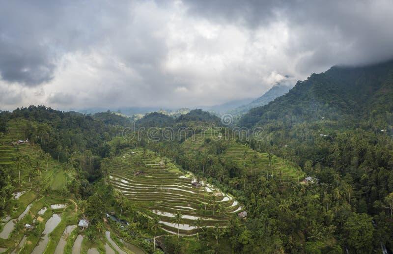 Risfält och terrasser i Bali royaltyfria bilder