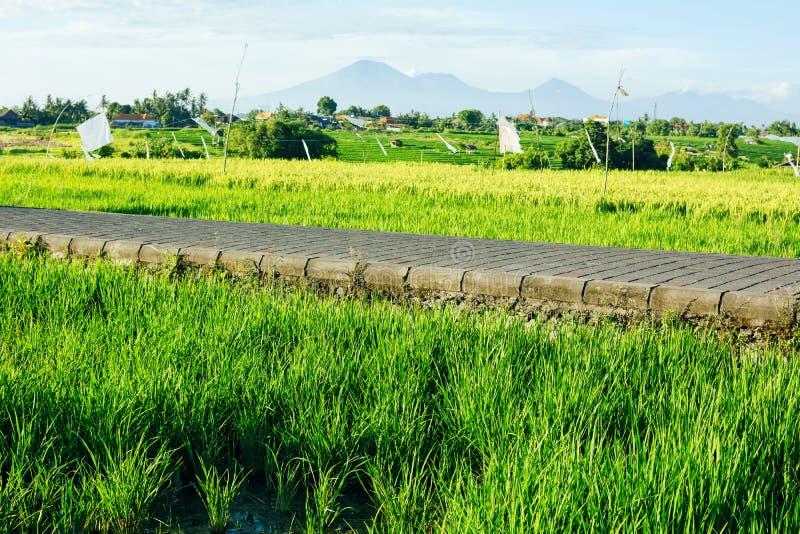 Risfält och väg med berg på bakgrund royaltyfria bilder
