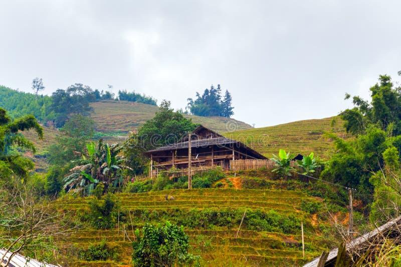 Risfält på terrasserade berglantgårdlandskap Lao Cai provin fotografering för bildbyråer