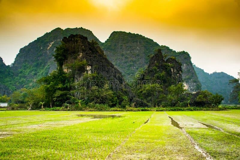 Risfält Tam Coc, Ninh Binh, Vietnam landskap arkivbild