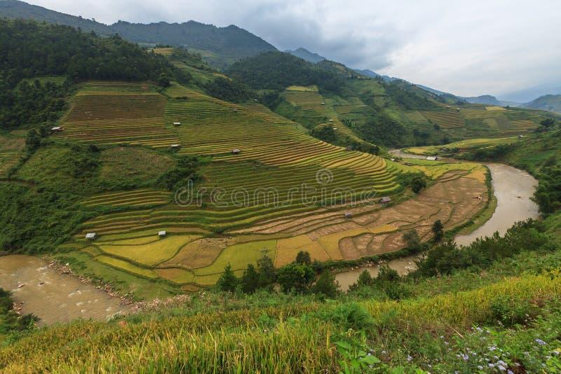 Risfält terrasserade på av Mu Cang Chai, YenBai, Vietnam royaltyfria foton