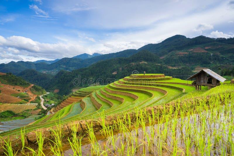 Risfält terrasserade på i rainny säsong på Mu Cang Chai, Yen Bai, Vietnam royaltyfri fotografi