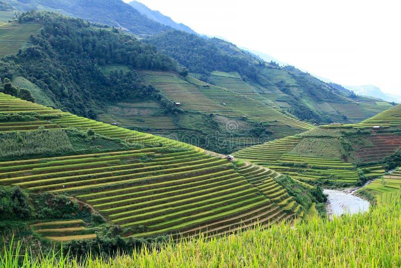 Risfält terrasserade på i rainny säsong på Mu Cang Chai, Yen Bai, Vietnam royaltyfri foto