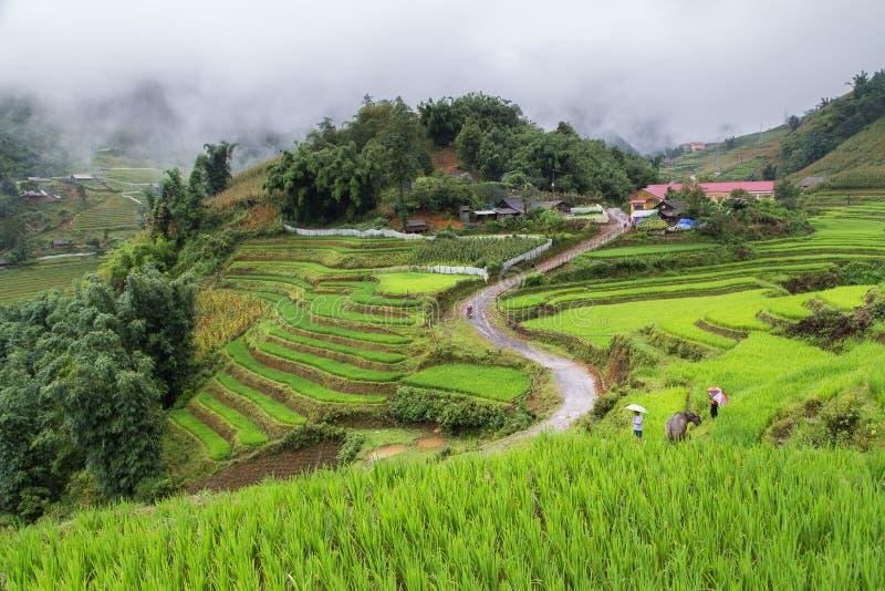 Risfält terrasserade på i rainny säsong på SAPA royaltyfri fotografi