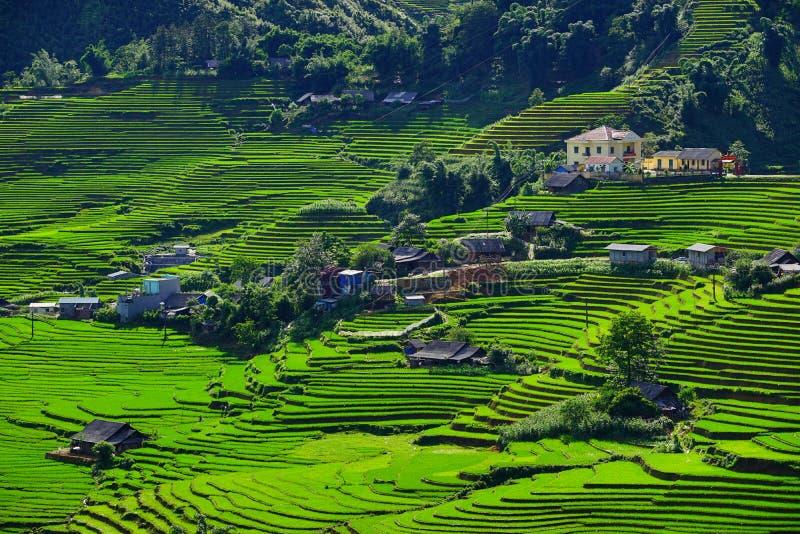 Risfält terrasserade på i rainny säsong på SAPA, Lao Cai, Vietnam royaltyfria foton