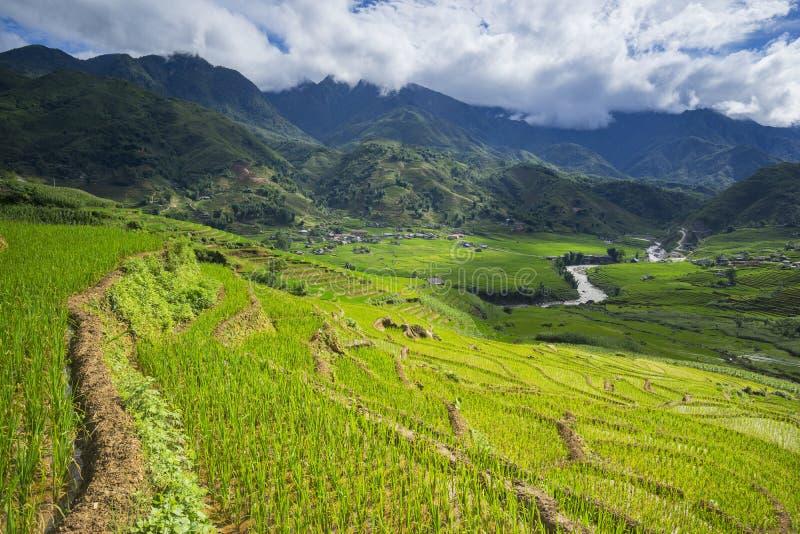 Risfält terrasserade på i rainny säsong på SAPA, Lao Cai, Vietnam royaltyfria bilder