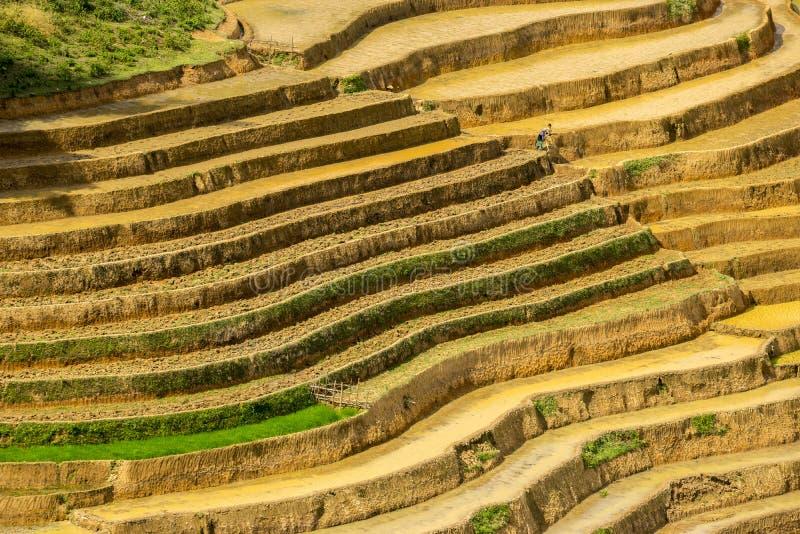 Risfält terrasserade på i rainny säsong på SAPA, Lao Cai, Vietnam arkivfoto