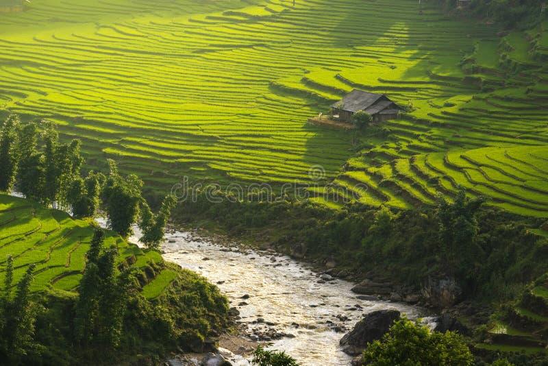 Risfält terrasserade på i rainny säsong på SAPA, Lao Cai, Vietnam arkivbild