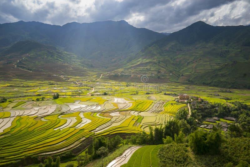 Risfält terrasserade på i rainny säsong på Tu Le by, Yen Bai, Vietnam fotografering för bildbyråer
