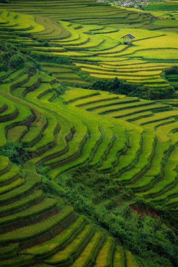 Risfält terrasserade på i solnedgång på Mu Cang Chai, Yen Bai, Vietnam royaltyfri bild