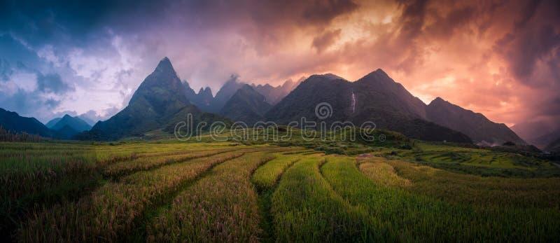 Risfält terrasserade på med monteringsFansipan bakgrund på solnedgången i Lao Cai, nordliga Vietnam Fansipan är ett berg i Vietna fotografering för bildbyråer