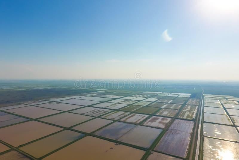 Risfälten översvämmas med vatten Översvämmade risfält Agronomiska metoder av att växa ris i fälten royaltyfri fotografi