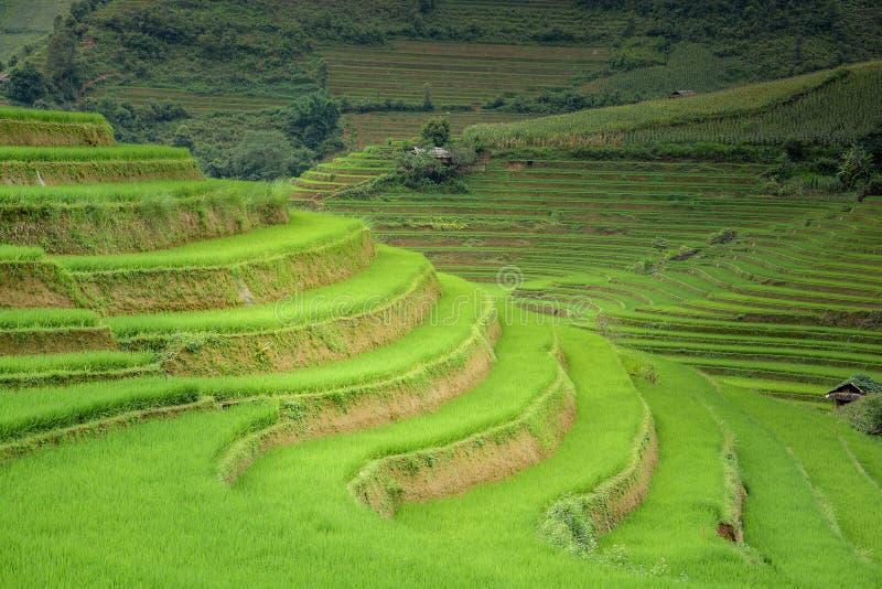 Risfältet terrasserade i Mu Cang Chai, Vietnam royaltyfria foton