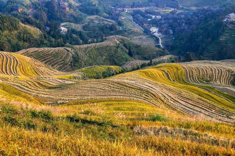 Risfältet terrasserar, Longsheng, Hunan, Kina royaltyfri bild