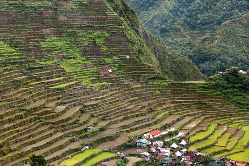 Risfältterrasser i Filippinerna arkivfoto