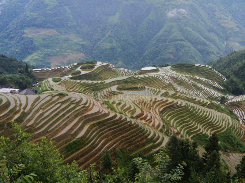 Risfältterrasser i Guilin i landskapet av Guangxi, Kina royaltyfri foto