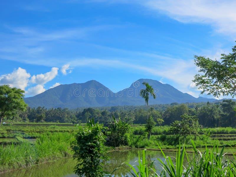Risf?lt som ?versv?mmas med vatten Frodig tropisk vegetation Kokospalmen och djungeln är i avståndet Panorama av berg royaltyfri fotografi
