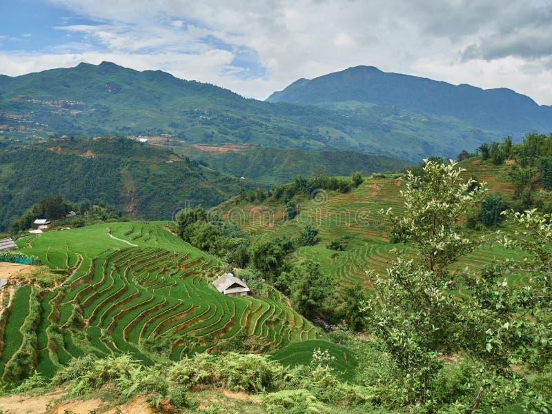 Risf?lt terrasserade p? i rainny s?song p? SAPA, Lao Cai, Vietnam royaltyfri fotografi