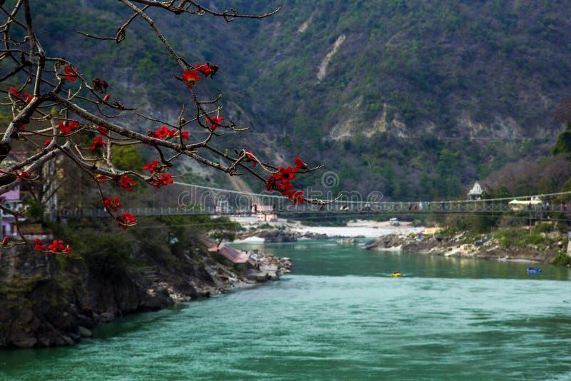 RISHIKESH, INDIEN - Ansicht zu Ganga-Fluss und lakshman jhula vom Café unter Magnolienbaum stockfotos