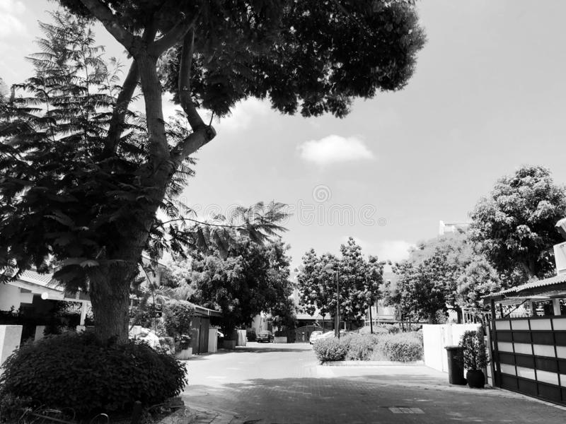 RISHON LE ZION, ISRAEL -August 9, 2018: The street is full of trees in Rishon Le Zion, Israel.  royalty free stock photo