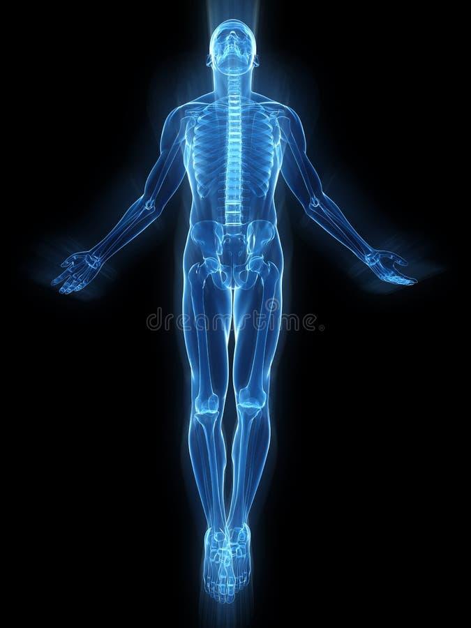 Rising body - x-ray royalty free illustration