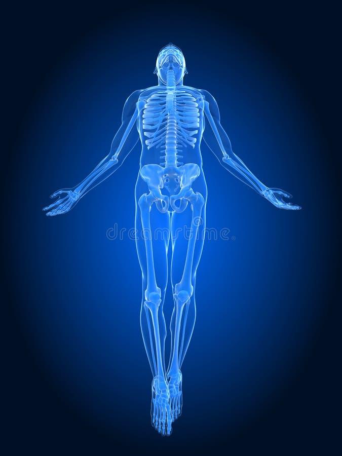 Rising Body - X-ray Royalty Free Stock Photos