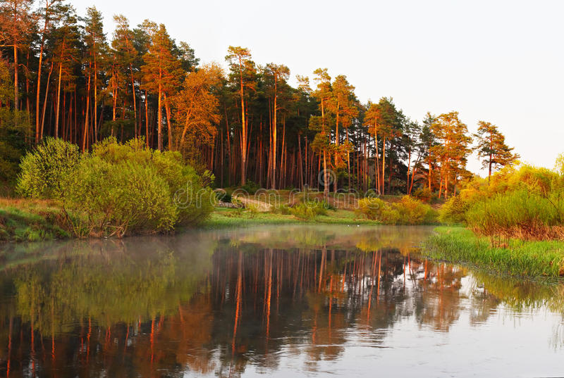 Rising morning sun shining on lake. And forest royalty free stock photo
