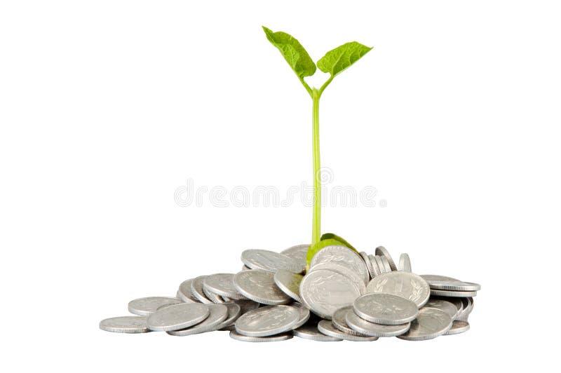 rising savings royalty free stock photo