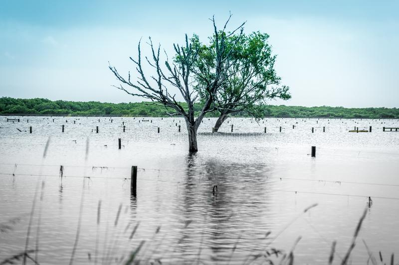 Rising sea levels cause fooding in coastal areas. Rising sea levels cause flooding in coastal areas stock photos