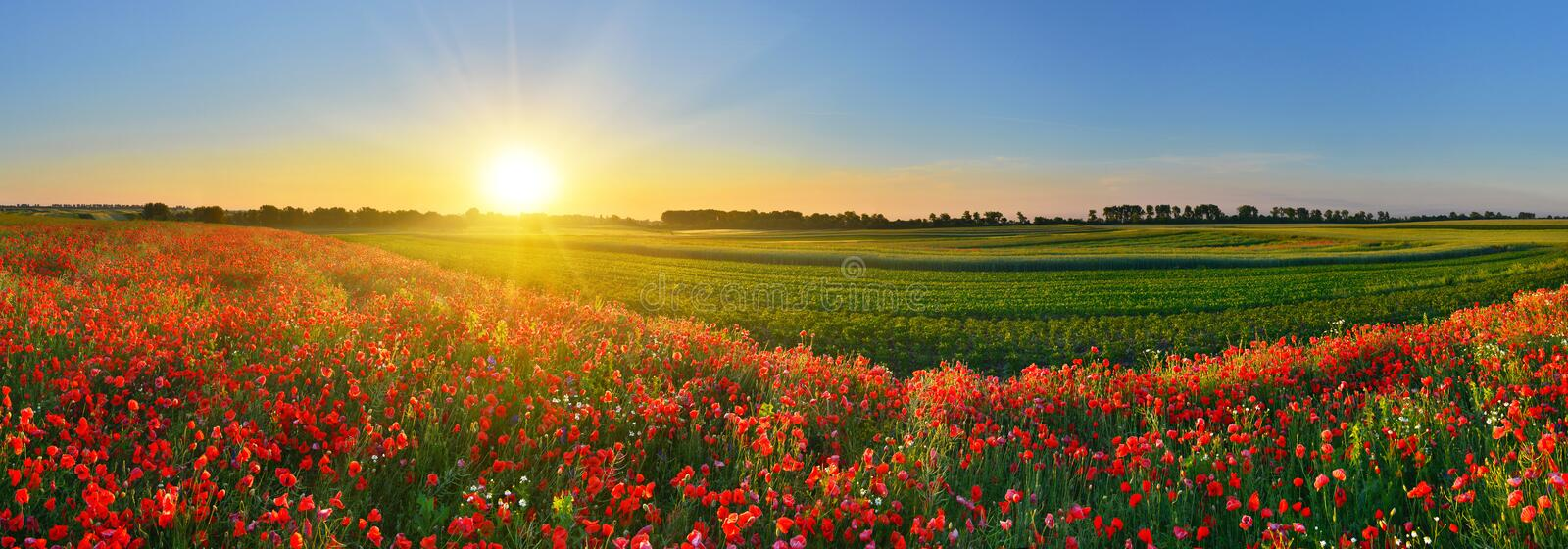 Rising sun above the field of red poppies in summer. Rural landscape at sunrise stock images