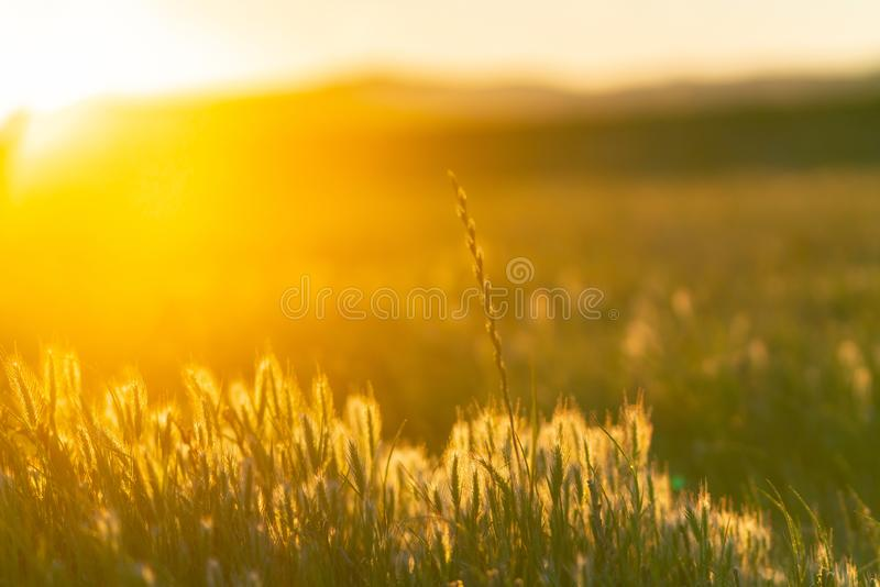 Rising sun back-lights golden landscape. At Wairau Lagoons in Belnheim, New Zealand royalty free stock images
