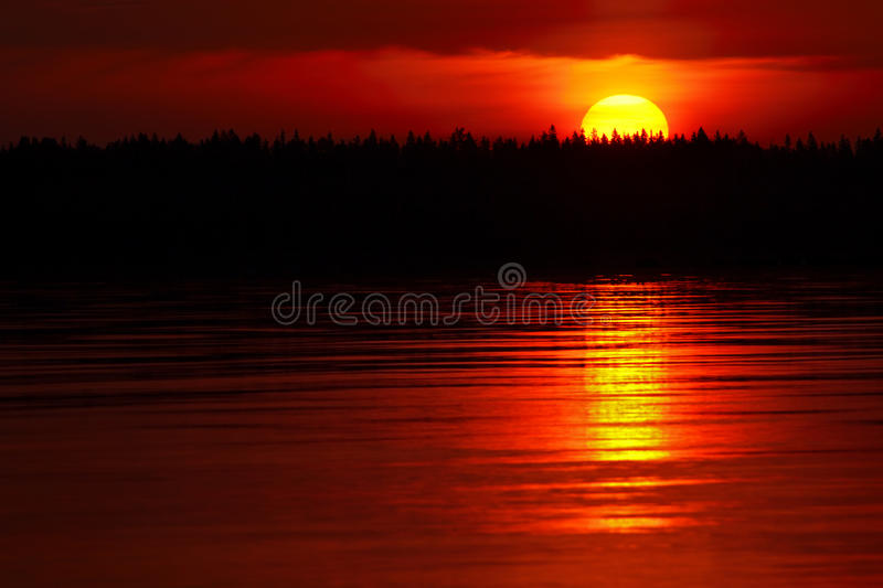 Rising sun. Behind trees on sea coast in early summer morning , nature background stock photos