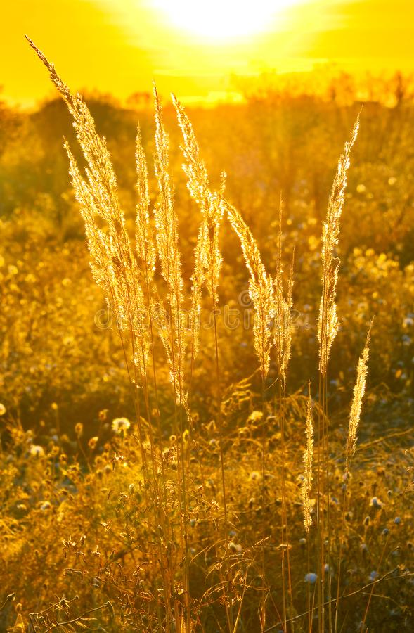 Rising sun in early morning in autumn countryside. Beauty of warm sunlight at sunrise stock images