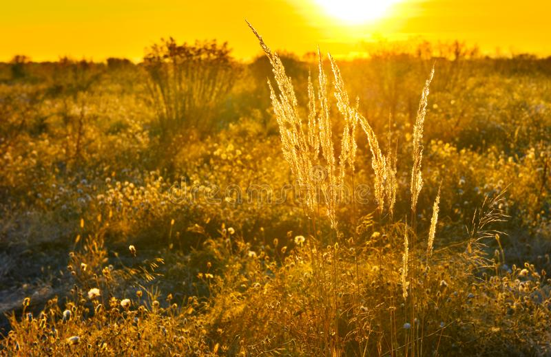 Rising sun in early morning in autumn countryside. Beauty of warm sunlight at sunrise royalty free stock photo