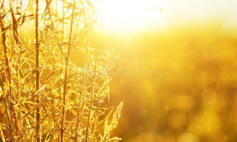 Rising sun in early morning in autumn countryside. Beauty of warm sunlight at sunrise royalty free stock photos