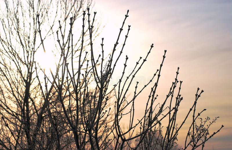 This is the rising sun of early spring. Every day, his strength increases royalty free stock images