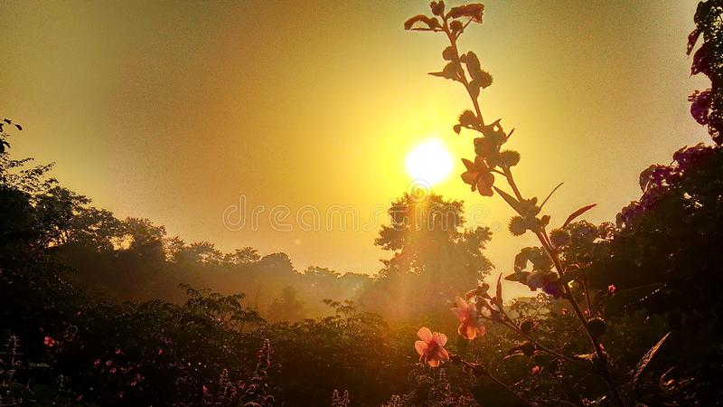 Rising sun. Golden morning due to Rising sun and pink flowers stock images