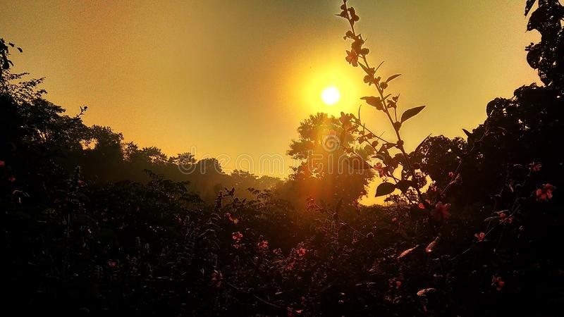 Rising sun. Golden morning due to Rising sun and pink flowers royalty free stock image