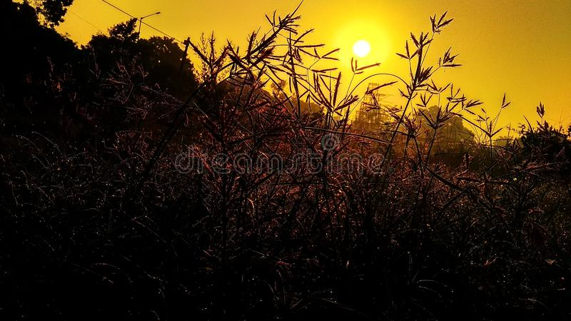 Rising sun. And golden view of plants and sky stock images