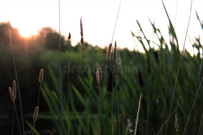 Rising Sun by the Lake. Image of the sun coming up behind the trees by a small lake royalty free stock photos